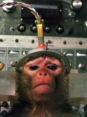 vivisección-mono
