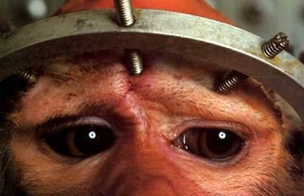 vivisección-mono2